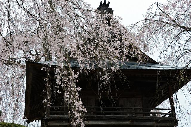 円正寺11