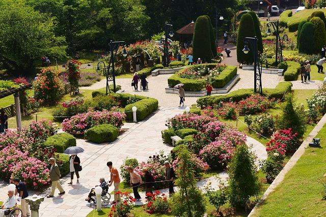 バラ公園 15