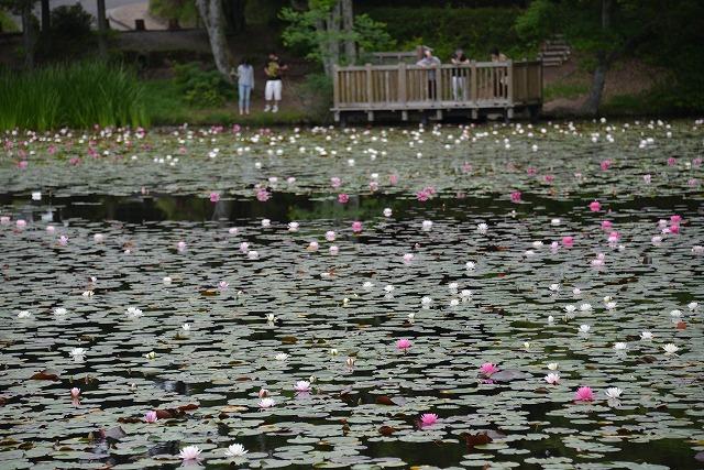蛇の池 1