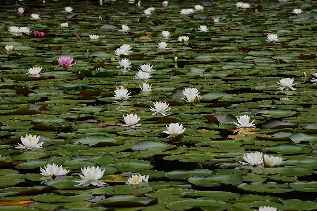 蛇の池 14