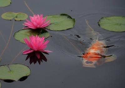 蛇の池 8