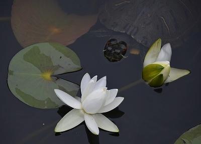 蛇の池 7