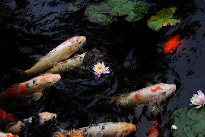 蛇の池 15
