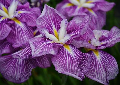 向原の花 6