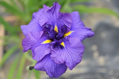 向原の花7