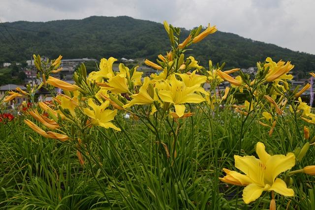 向原の花12