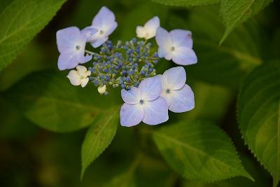 向原の花3