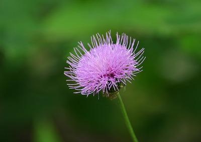 向原の花 18