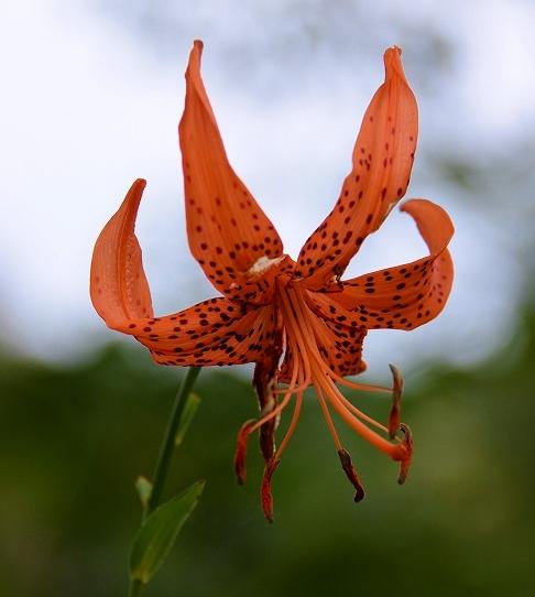 初秋の花1