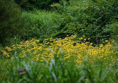 初秋 の花2