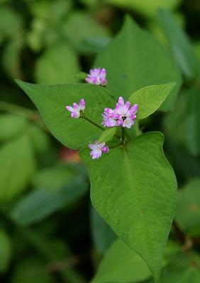 初秋の花8