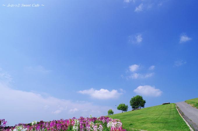 夏空と三本の木