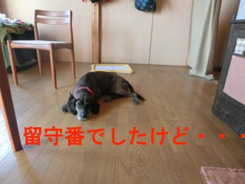 CIMG1754_convert_20140422235307.jpg