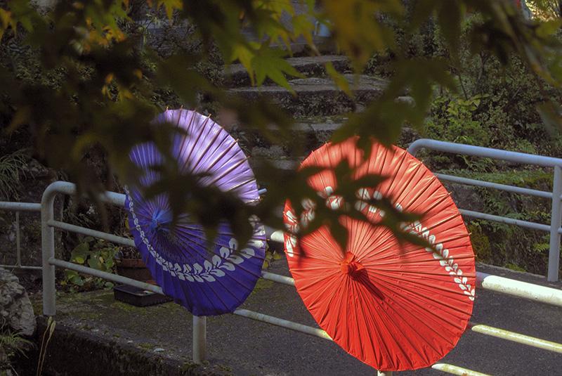 和傘:2013秋