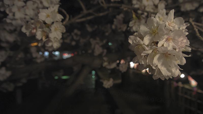 夜桜2014330