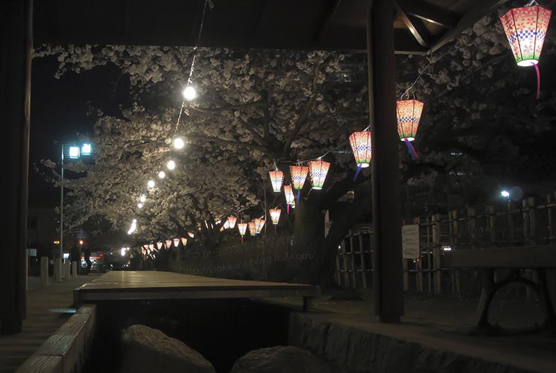 夜桜2014330③