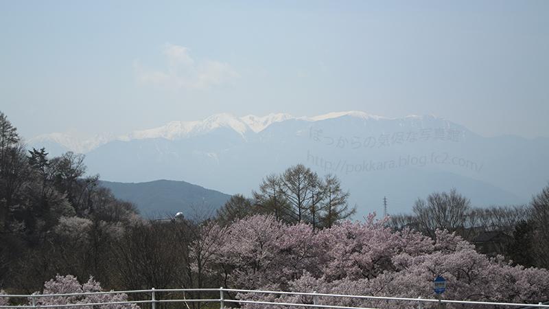 高遠:桜と南アルプス