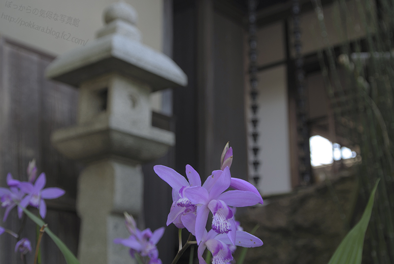 旧近衛邸2014_5③