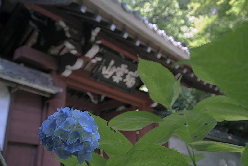 2014_0608本光寺②