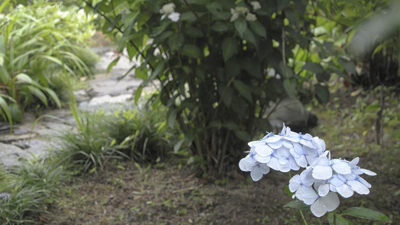 2014_0622本光寺④