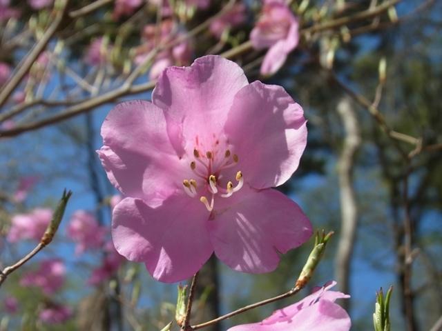 夏木山の花002