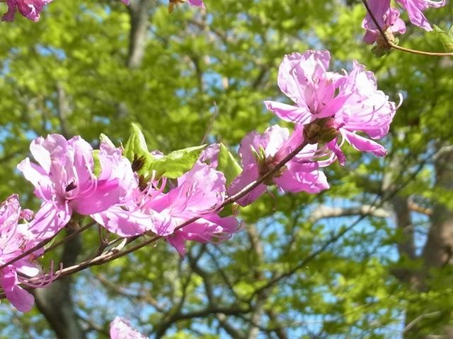 夏木山の花001
