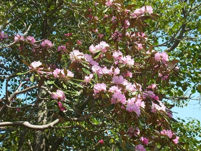 夏木山の花004