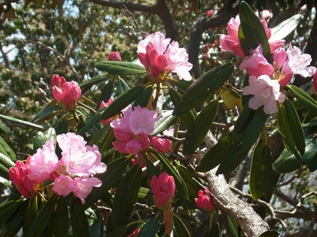 夏木山の花007