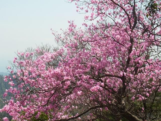 夏木山の花006