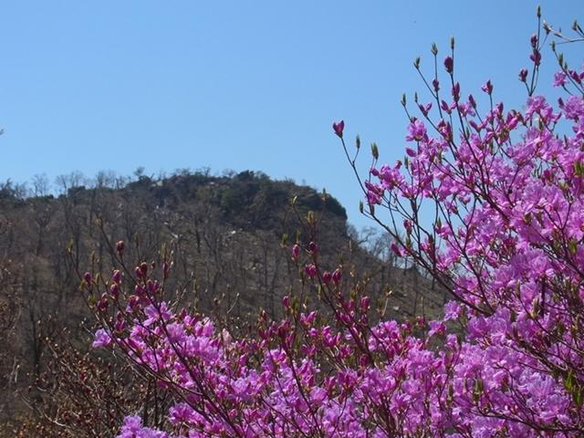 夏木山の花008