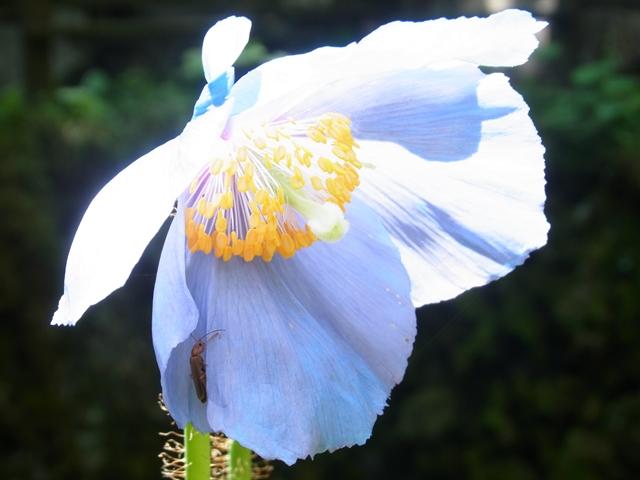 皿ヶ嶺の花004