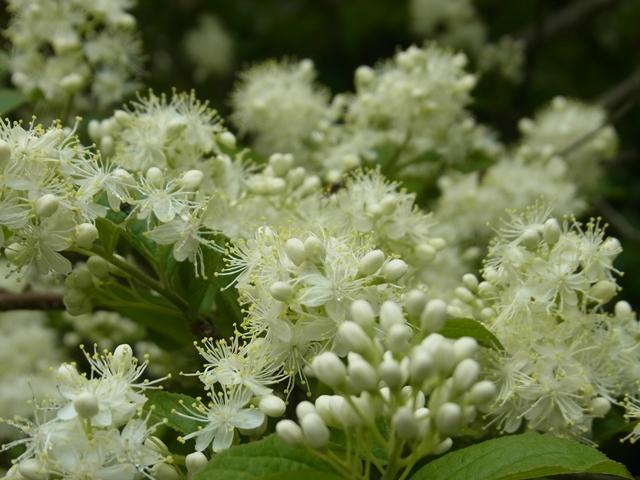 恐羅漢山の花011