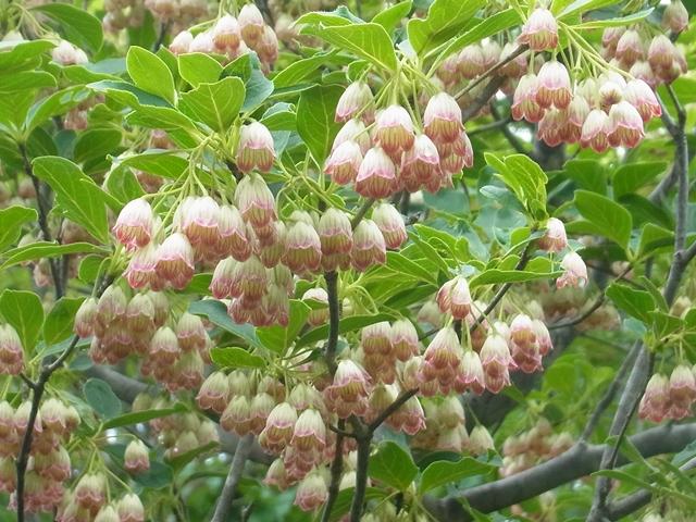 恐羅漢山の花012