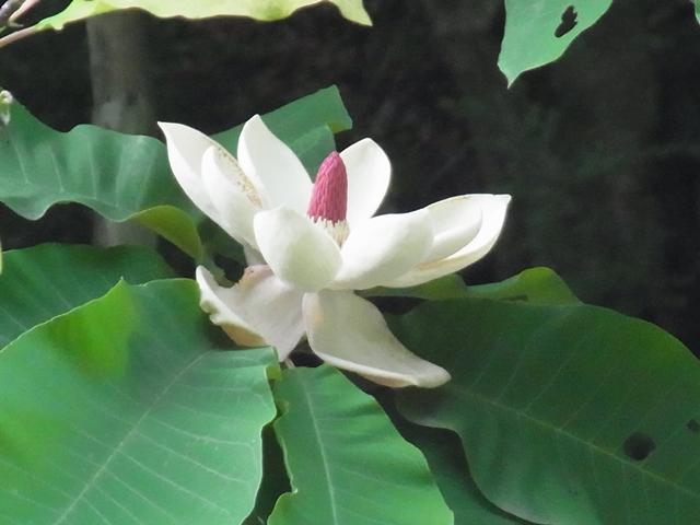 恐羅漢山の花020