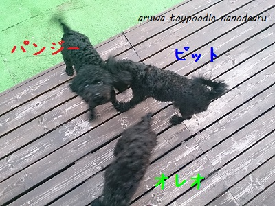 DSC_1261-2.jpg