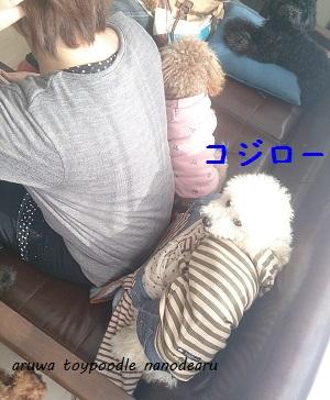 DSC_1626_20140311232622688.jpg