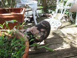 私の気配に気づいて移動するママちゃんと目で追う子猫