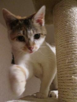 チャーミーの猫パンチ