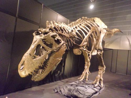 ヨコハマ恐竜展・ティラノ