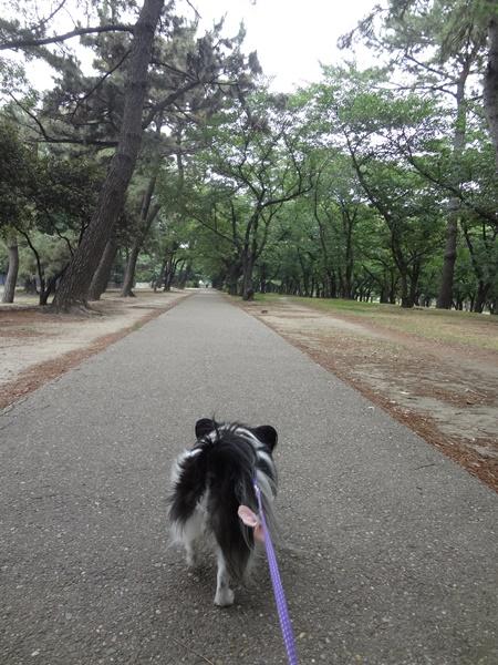 桜のトンネルへ
