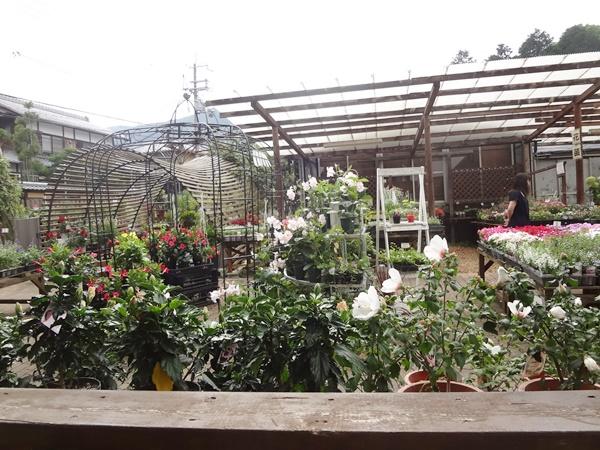テラスから見える園芸店