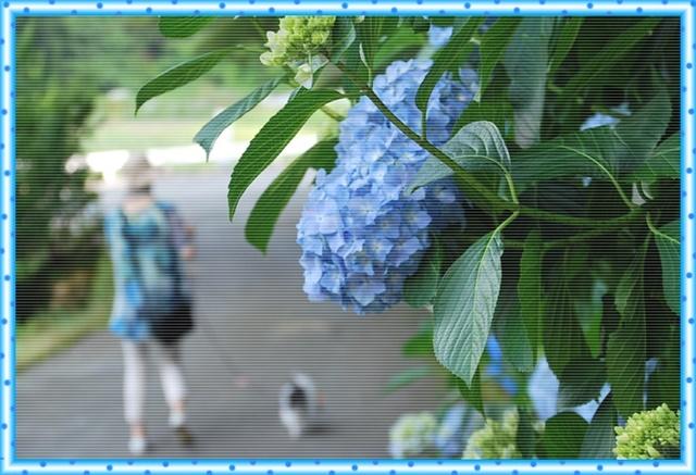 あじさいの咲く道フレーム付