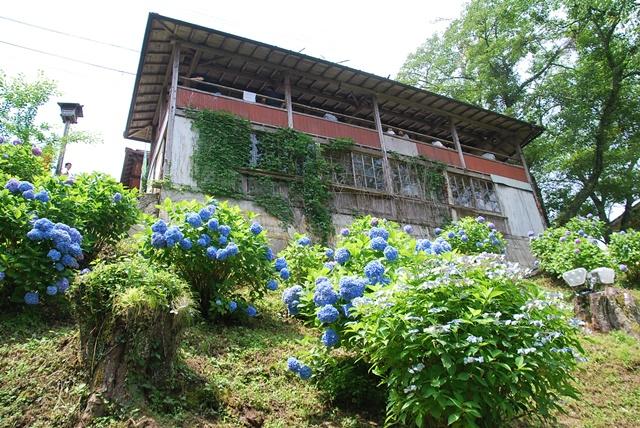 休憩所と紫陽花