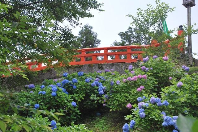 朱い橋と紫陽花
