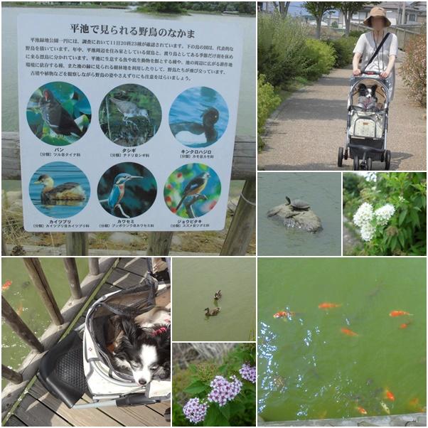 平池公園の生き物