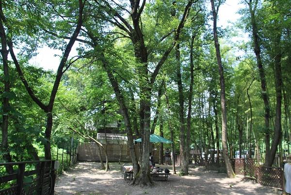 森の中のドッグラン1