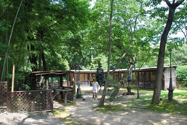 森の中のドッグラン2