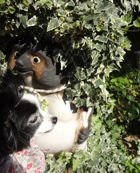 狸の置物とルビー