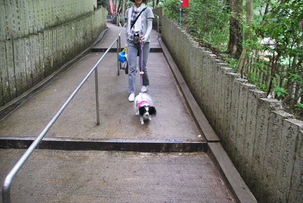 犬鳴山帰り道
