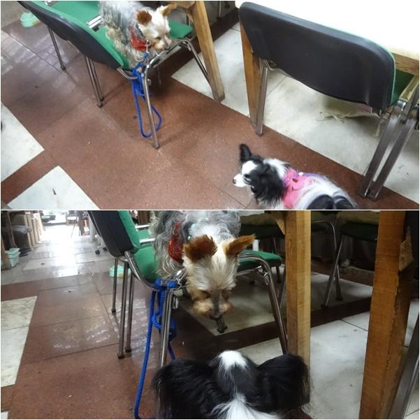 看板犬のヨーキーちゃんとご挨拶